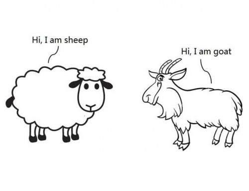 A Picture Tells The Differences Between Cashmere and Wool